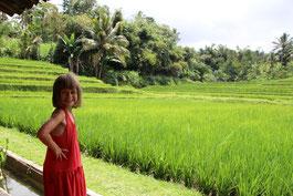 Devant les rizières de Jatiluwih