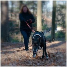 Mantrailing, Personensuche, Nasenarbeit, Suchhund