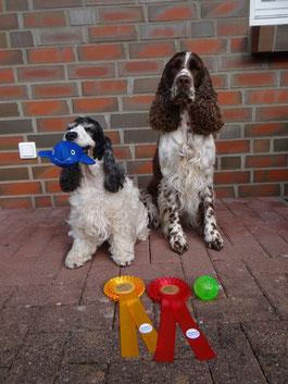 Zwei erfolgreiche Spaniels - Jule und Holly, Foto: Svenja Arendt