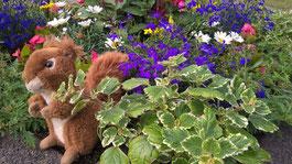 Achtsam wie ein Eichhörnchen - Achtsamkeit mit Kindern - Achtsamkeitskurse in Düsseldorf - Achtsam mit dir - Eichhörnchen versteckt in Blumen