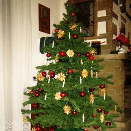 Der Weihnachtsbaum als Symbol.