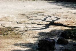Schatten, Platz, Baum