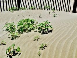 Strand, Pflanzen, Sand