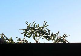 24. Juli 2015 - Blick über den Balkon hinaus