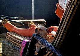 Liegestuhl, Strand, Hund