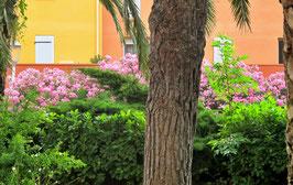 Pink, Blumen, Natur
