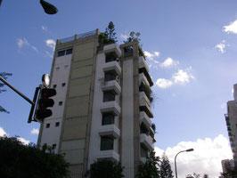 31 декабря 2009 ИЗРАИЛЬ г Тель-Авив деревья на крыше дома