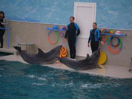 """Дельфинарий """"НАМ И НА СУШЕ СОВСЕМ НЕПЛОХО!"""""""