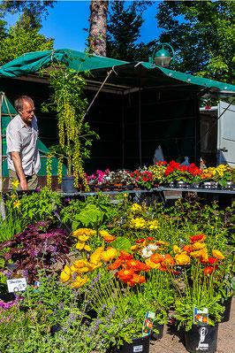 Wochenmarkt in  Fassberg 2015