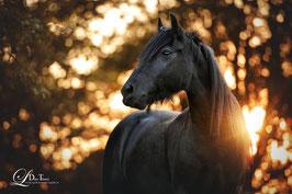 Pferdegestützte Psychotherapie*