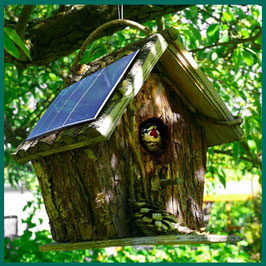 © Angela Stolle Photovoltaik Haus Dach Vogelhaus Kohlmeise