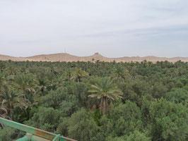 Palmyra, die Wüstenoase in Syrien