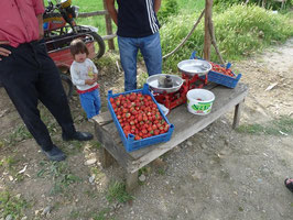 Unterwegs: Frische Erdbeeren!!!