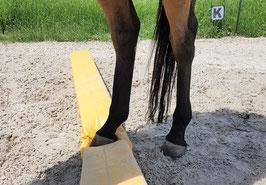 Lernen, sich besser abzugrenzen mit dem Pferd als Co-Coach.