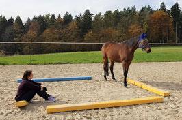 Pferdegestützte Coachings in Entwicklungsprozessen_horse-feedback.ch