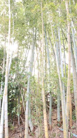 晴れの日の竹の写真フリー素材 Bamboo photo free material on a sunny day