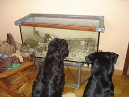 Tango&Cashs Heim mit den Hunden und Willow