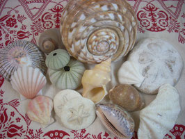 三浦半島の貝たち・・・