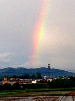 田畑にかがやく山鹿の虹