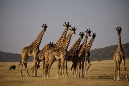 Luxus Reise Tansania