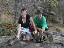 Rockwallabies an Granit Gorge