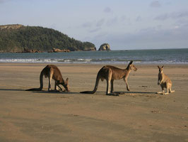 Cape Hillsborough NP