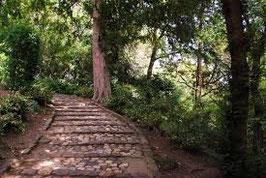 Yoga au Jardin des Plantes de Toulouse. Le chemin