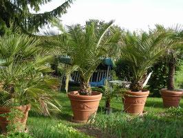 Palmengarten ist eröffnet 21.5.2009