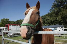Pferdemarkt Neugattersleben