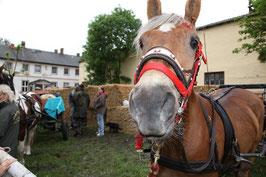 5. Mitteldeutsche Pferdemarkt