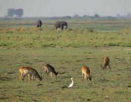 Viele Tiere auf einem Fleck