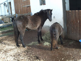 Zwei , dei sich gesucht und gefunden haben : Saari und June !!!