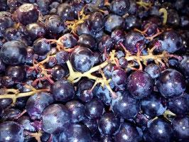 Vendange 2017 AOC Vins des Côtes de Toul Jan Tailler L'arbre Viké Bulligny Lorraine