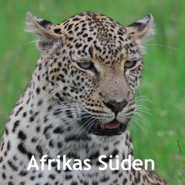 Tierwelt - Reisen nach Südafrika - Leopard