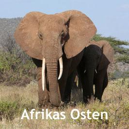 Wildbeobachtung - Kenia und Tansania Reisen  -Elefant