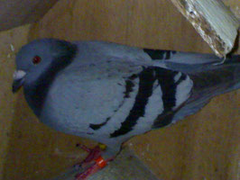 """""""PRIMERA"""" EPFC 08-83221. 10th Placer in Catbalogan clocked 30 mins after arrival. Daybird."""