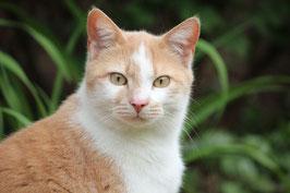 Durch einen Klick gelangen Sie zu den vermittelten Katzen
