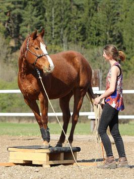 Ein Pferd steht mit allen Beinen auf einem Podest