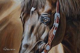 Detailansicht Pferdeauge