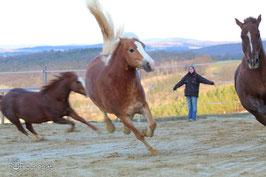 Pferdekundige Helfer erleichtern die Arbeit