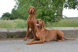 Beide Hunde als Vorlage für das Gemälde (Foto: A.Franzke)