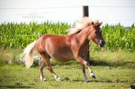 Ponystute Tinkerbell (Foto: Eva Stöger)