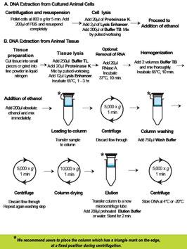 Aufreinigung von DNA aus verschiedenen Geweben