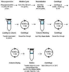 Aufreinigung von Plasmid DNA aus bakteriellen Proben