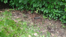 Die Teebeutel sind vergraben und markiert