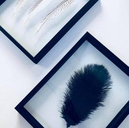 plume, décoration plume, webshop déco, décoration cadre plume