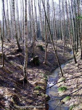 Seifenfeld am Nordhang des Ungers, Langburkersdorf / Neustadt in Sachsen