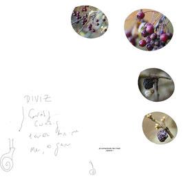 photo nature Bulles de Vie poesie bretagne @johannegicquel.com