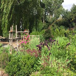 Daphne's Garden, Willow Tree