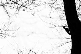 Nordhessische Naturfototage HNA-Fotowettbewerb 2015